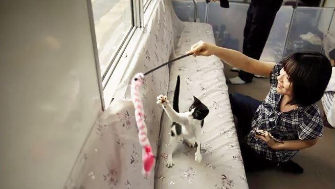 Japon: dans ce train, les passagers peuvent caresser une trentaine de chats