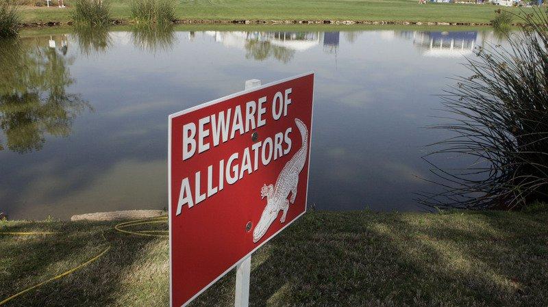 Mort d'un enfant à Disney World: le parc était infesté d'alligators