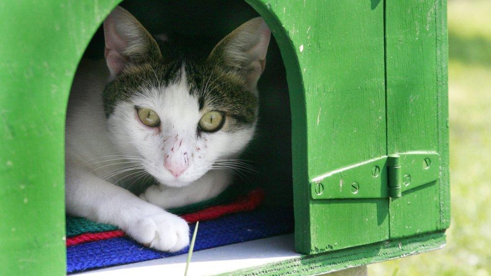 La SPA veut accueillir les chats dans de meilleures conditions.