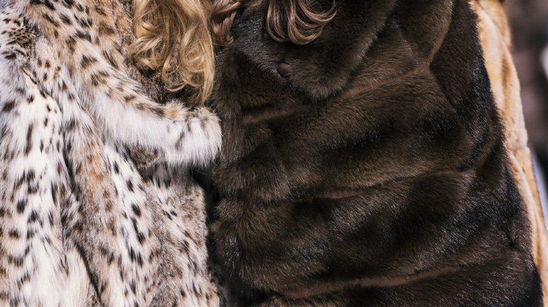 Depuis le 1er mars 2013, les commerces qui vendent de la fourrure en Suisse doivent indiquer le nom de l'animal, son origine, s'il a été capturé à l'état sauvage ou s'il est issu de l'élevage. (illustration)