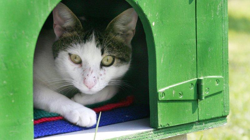 Nyon: le refuge de la SPA va s'agrandir pour mieux accueillir les chats