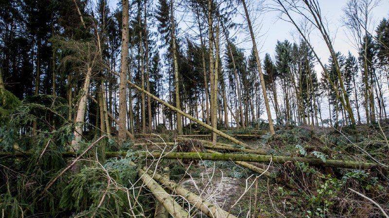 Suite à la tempête Eleanor/Burglind, les promenades en forêt sont déconseillées