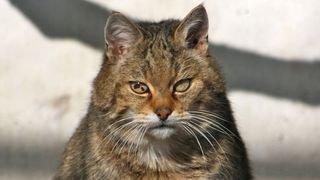 chat sauvage de l'ancienne Garenne 2