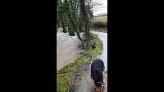 L'Asse déborde après les pluies à Nyon