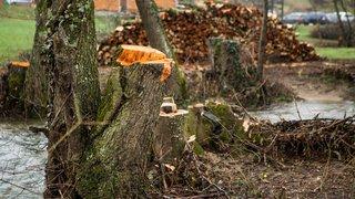 Des coupes d'arbres au bord de l'Asse émeuvent sur Facebook