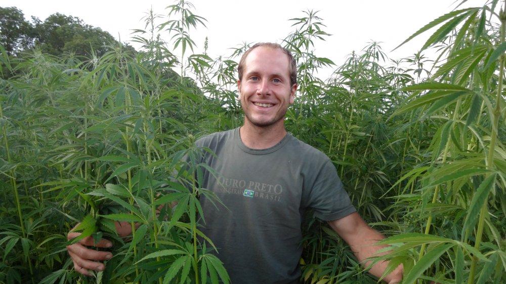 François Devenoge dans une de ses cultures de chanvre agricole biologique destinée à la production de graines pour de l'huile alimentaire. La plante est semée au printemps, récoltée en automne et cueillie à la main.