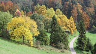 Arboretum: le parc botanique est né il y a 50 ans