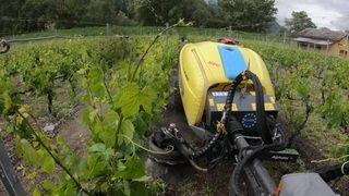 De l'eau pour désherber les vignes