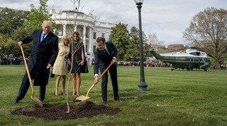 France - Etats-Unis: où est passé l'arbre planté par Trump et Macron il y a une semaine ?
