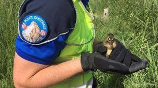 Une cane et ses petits sauvés par la police valaisanne