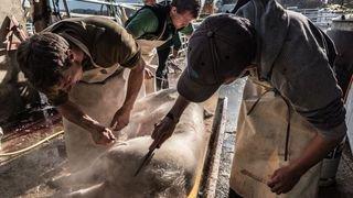 «Faire boucherie», la tradition se perd mais s'expose à Chiblins