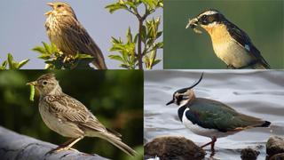 Comment sauver les oiseaux de la région