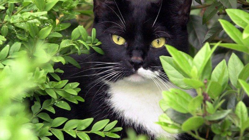 Animaux: une pétition demande la castration des chats qui se promènent en liberté