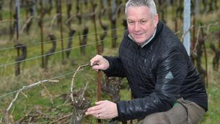 Les vins bio de la région ont cartonné