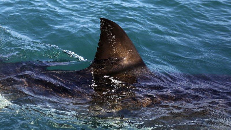 Egypte: un touriste tchèque tué par un requin près de Marsa Alam