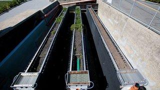 Vinzel veut prendre le train de la dépollution naturelle