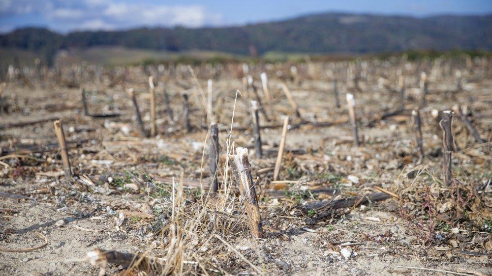 Sur La Côte, les champs sont très secs à cause du manque durable de pluie.