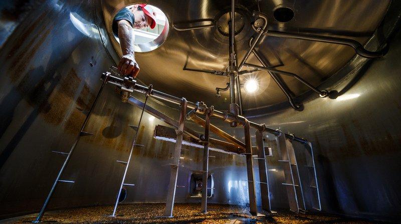 Orge: les changements climatiques menacent la production de bière