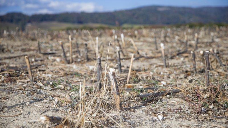 La Côte n'a plus vu de pluie depuis 4 mois