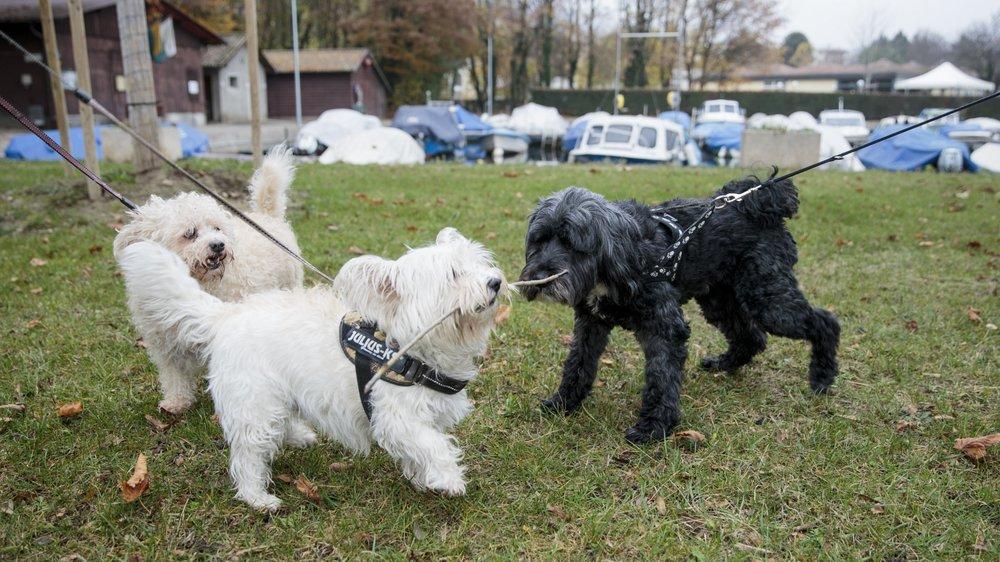 Au moins, un chien s'était empoisonné en ingurgitant un petit pain de mort-aux-rats la semaine dernière sur les rives rolloises. La source est maintenant connue, mais l'enquête se poursuit pour connaître les raisons de cette dispersion peu sure.