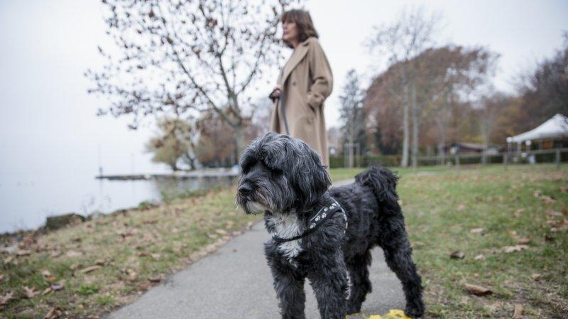 De la mort-aux-rats a empoisonné la sérénité des promeneurs de chiens rollois