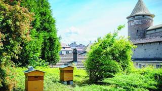 Morges: du miel solidaire pour les enfants cancéreux