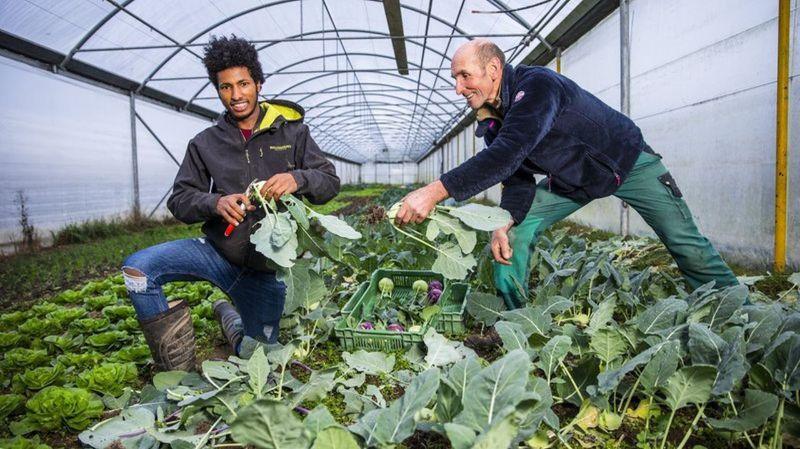 Colombier: à la ferme Les Sapins, le jeune apprenti vient de loin