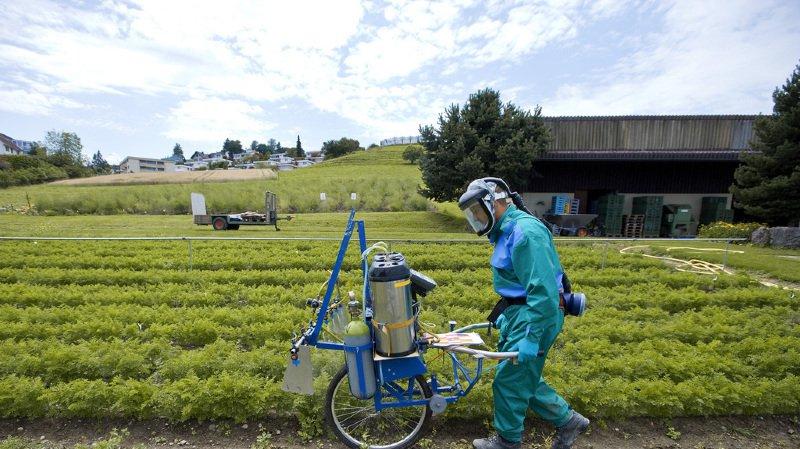 Agriculture: les ventes de glyphosate et autres produits phytosanitaires sont en baisse