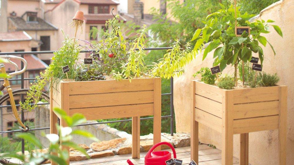 Plus besoin de jardin pour cultiver ses propres légumes grâce aux potagers urbains.