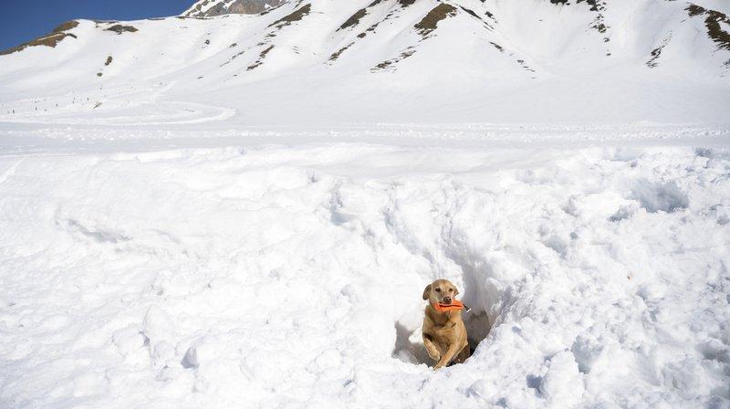Berne: les 25 meilleurs chiens d'avalanche du pays s'affrontent à Adelboden