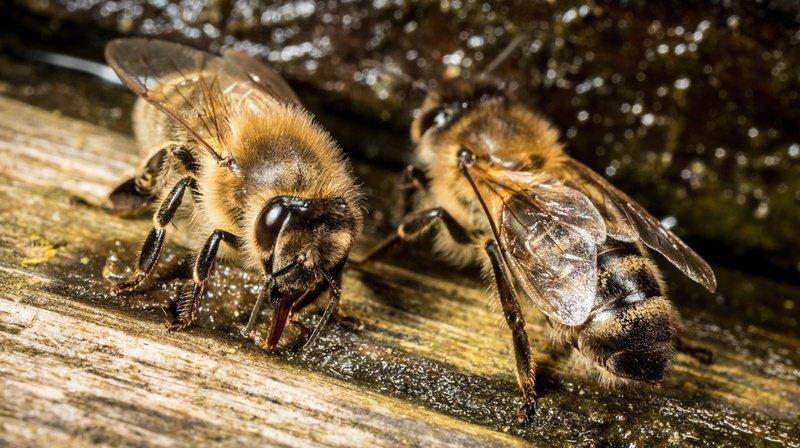 La cathédrale de Notre-Dame compte plusieurs ruches situées sur la sacristie. Les abeilles ont été sauvées. (illustration)