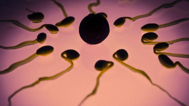 Les chercheurs ont identifié des bactéries qui influencent positivement et d'autres négativement les paramètres du sperme, comme par exemple la morphologie ou la motilité.