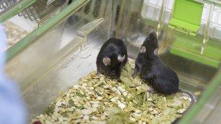 L'expérimentation animale en Suisse, qu'en est-il? Tour d'horizon en quelques chiffres