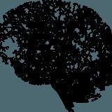 Conférence : à la découverte du cerveau