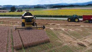 Agriculture: la région mise sur des valeurs sûres
