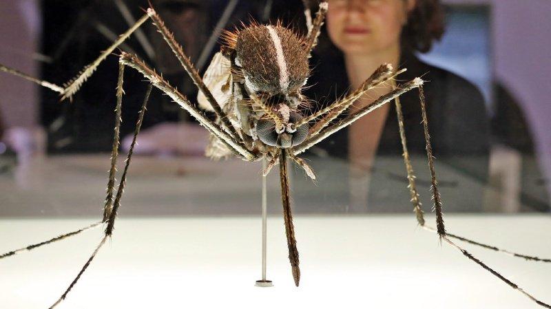 Le moustique-tigre peut propager des maladies graves.