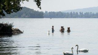 Argovie: la police cherche un caïman signalé par un pêcheur dans le lac d'Hallwil