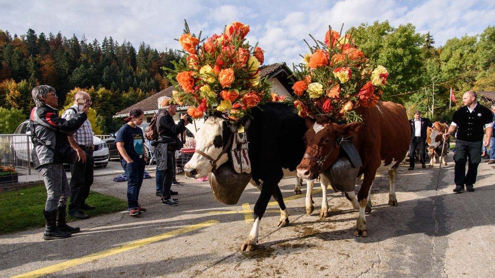 Les vaches sont coquettes pour descendre de l'alpage. Quant à la manifestation, elle ne se laisse pas bercer par le succès.