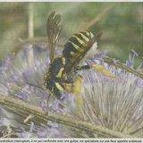 Conférence abeilles sauvages et visite guidée