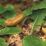 Contrôle officiel de vos champignons