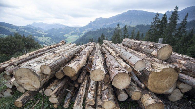 Désormais, seul le bois récolté et commercialisé de manière légale pourra être mis sur le marché en Suisse.