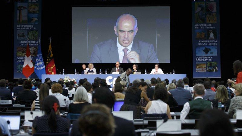 Espèces menacées: à la convention CITES, Alain Berset demande des réponses fermes