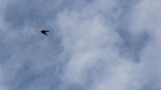Vaud: un Suisse de 43 ans perd la vie lors d'un saut en wingsuit