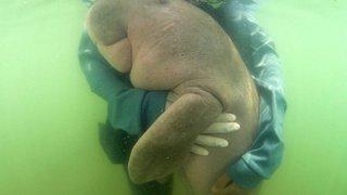 Thaïlande: Mariam, le bébé dugong star des réseaux, meurt après avoir ingéré du plastique
