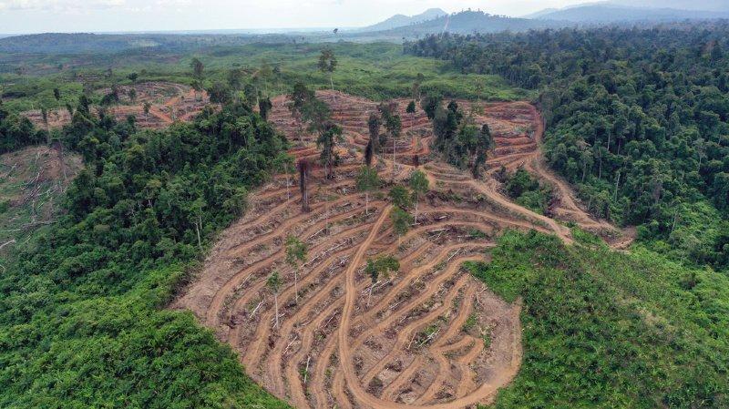 Les forêts d'Amazonie, d'Afrique équatoriale ou encore d'Indonésie sont de grands réservoirs de carbone. (illustration)