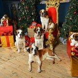 Noël à Barryland