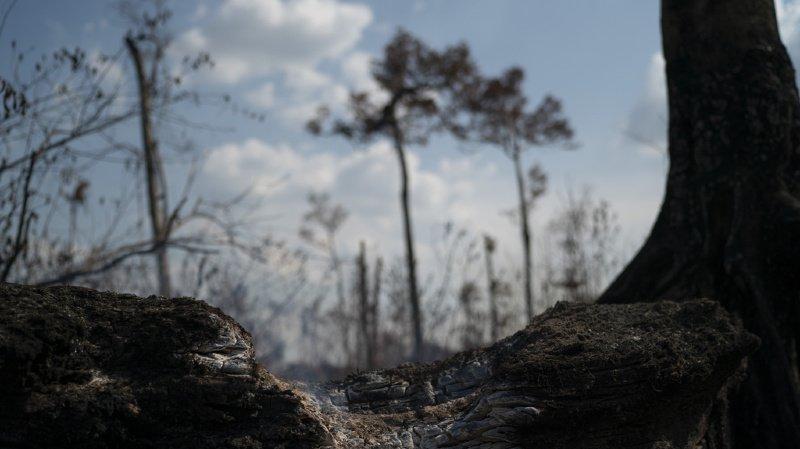 La Norvège a participé à la lutte contre la déforestation en proposant une rémunération au Guyana. (illustration)