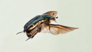 Grande-Bretagne: un nouvel insecte nommé en hommage à Greta Thunberg