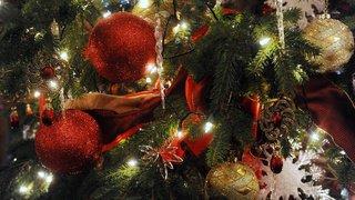 Noël: insectes, araignées… ces petits invités surprises qui se cachent dans votre sapin