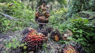 L'huile de palme ne sera pas exclue de l'accord avec l'Indonésie